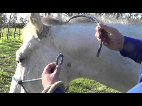 How to Properly Put a Rope Halter on Your Horse