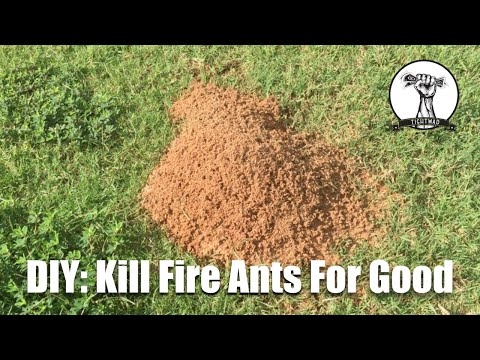 DIY: Kill Fire Ants For Good!