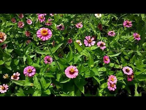 Dollar Tree Flower Seeds Blooming!!