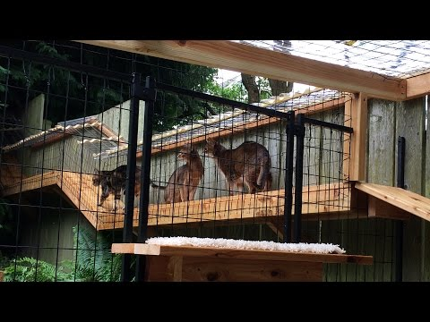 Who Let the Cats Out? Deluxe Cat Enclosure