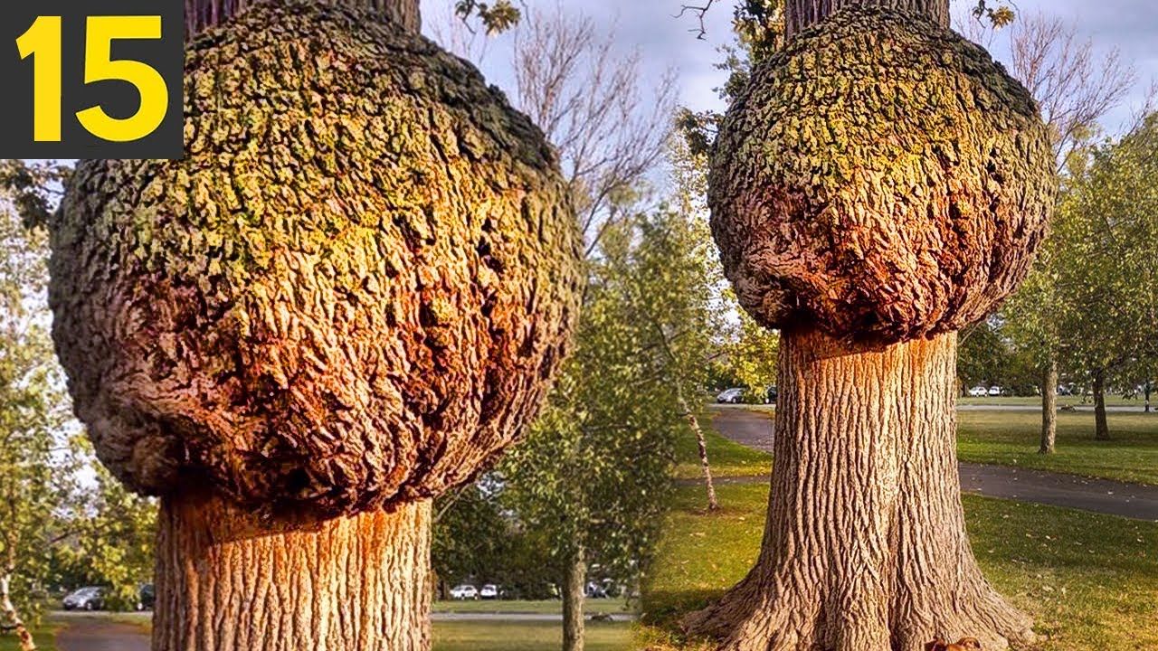 15 Most Unusual Trees In The World
