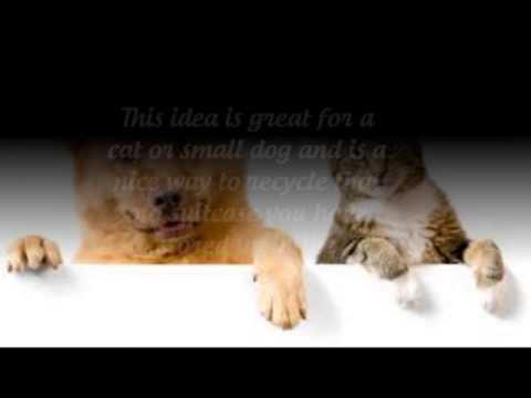 How To Eliminate Dog Odor In Carpet?