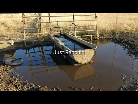 Just Ranchin