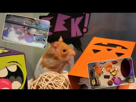 Syrian Hamster HALLOWEEN Cage Tour (Hamster Bin Cage)