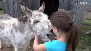 True Love - A Girl and her Donkey