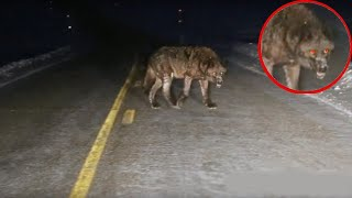10 MOST INCREDIBLE ENCOUNTERS WITH WILD ANIMALS ON THE ROAD