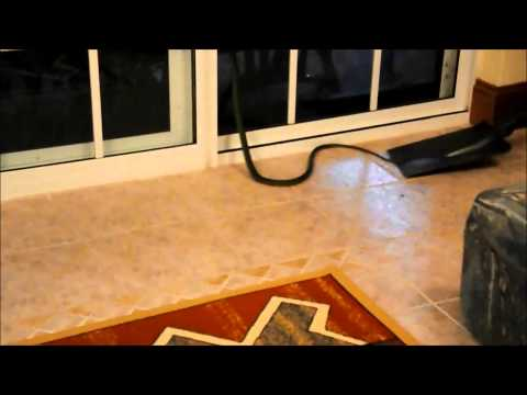 Wild Snake In A House In Australia Had To Be Removed
