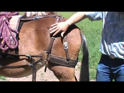 Fitting a Decker pack saddle to a mule
