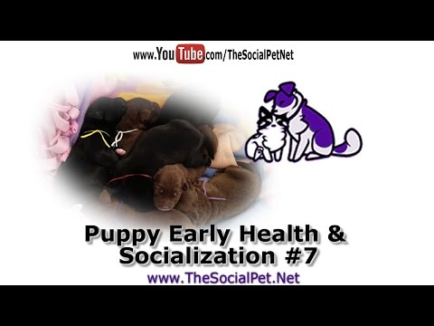 Puppy Early Health & Socialization #7