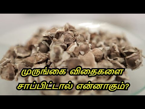 Benefits of Moringa Seeds in Tamil | Drumstick Seed | murungakkai Veethai Payangal in Tamil.