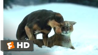A Dog's Way Home (2018) - Fun in the Snow Scene (4/10)   Movieclips