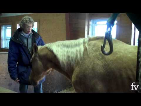 Sorrento Horse Contracts Lyme Disease
