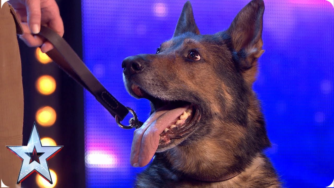 Heroic police dog Finn moves the Judges to tears | Auditions | BGT 2019