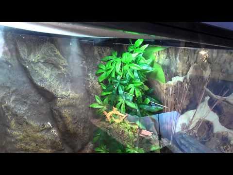 Homemade Reptile Humidifier / Fogger
