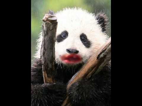 Talking panda ep.1
