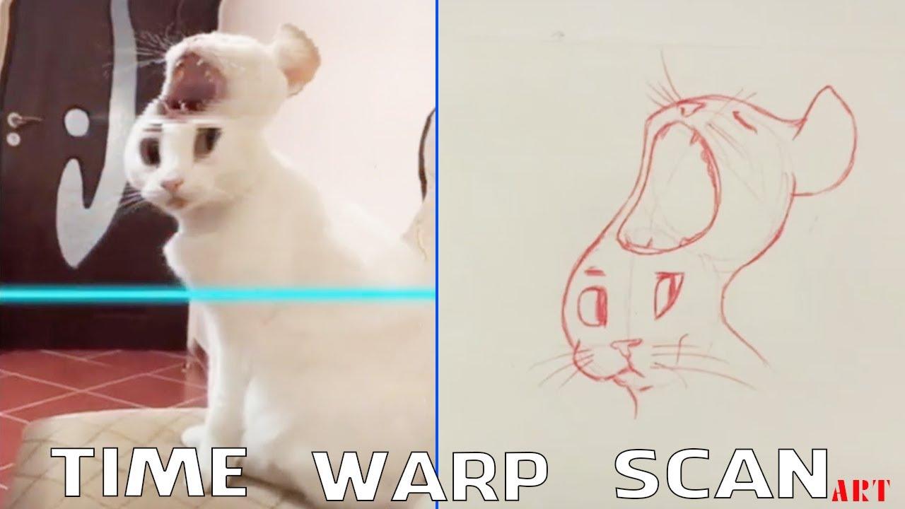 Time Warp Scan Animals #1 - TikTok Compilation
