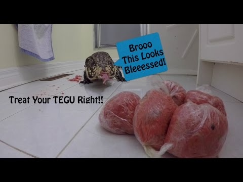 GOURMET Tegu Meal : How to FEED your TEGU RIGHT!!!