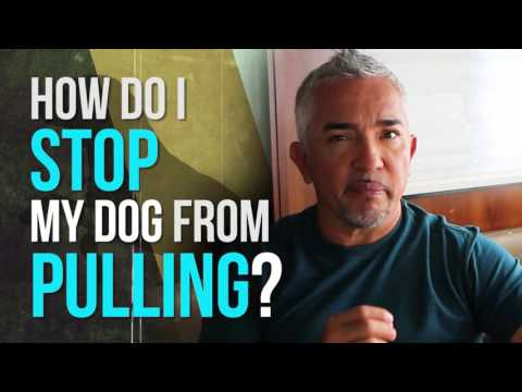 How to Stop Your Dog From Pulling