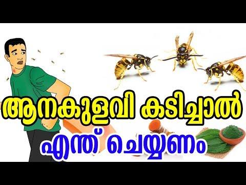 ആനകുളവി  കടിച്ചാൽ എന്ത് ചെയ്യണം | Home Remedies to Get Rid of Wasp Sting | Health Tips