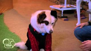 Dog With A Blog | My Parents Posted What?! | Disney Channel UK
