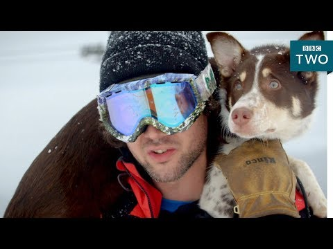 Could this dog save lives? - 10 Puppies and Us: Episode 2 Preview - BBC Two