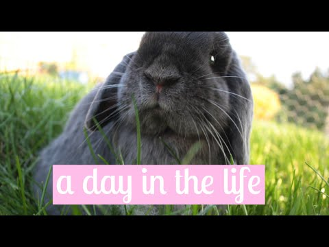 A Day in The Life of Paisley The Bunny    2015 Montage
