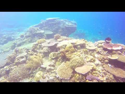 Snorkeling off Mangligad Island, Linapacan