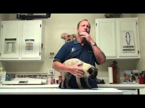 What Makes Dogs Itch?