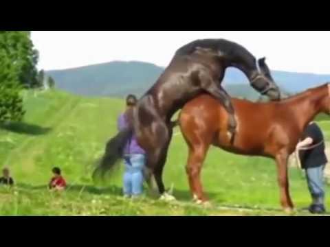Xxx Mp4 Kuda Kudaan 3gp Sex