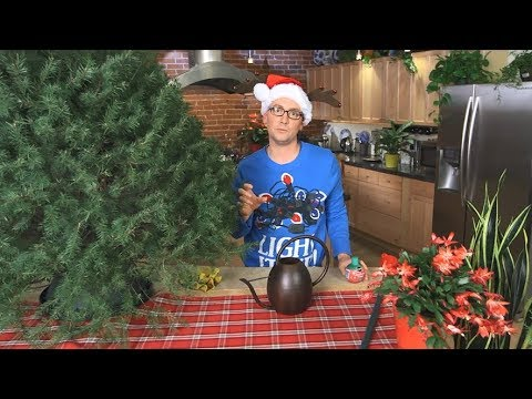 How To Keep Your Christmas Tree Green - Ace Hardware