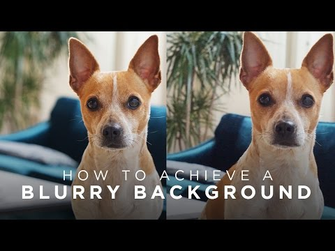 How to Achieve Blurry Backgrounds in Photos/Videos | TECH TALK