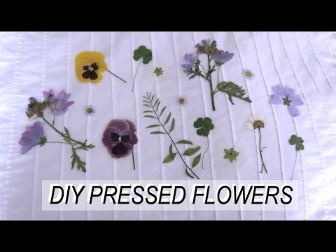 Pressed Flowers DIY | thetwinsofhearts