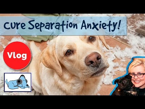 How to Cure Separation Anxiety in Dogs!