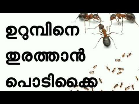 ഉറുമ്പിന്റെ ശല്യം ഒഴിവാക്കാന് How to Get Rid of Ants Fast Naturally