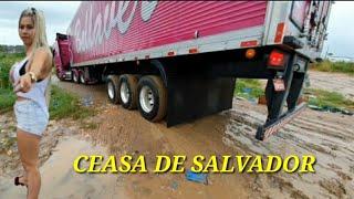 Que ceasa é esse Brasil? salvador ✅✅ #caminhoneira #sheilabellaver #caminhãorosa