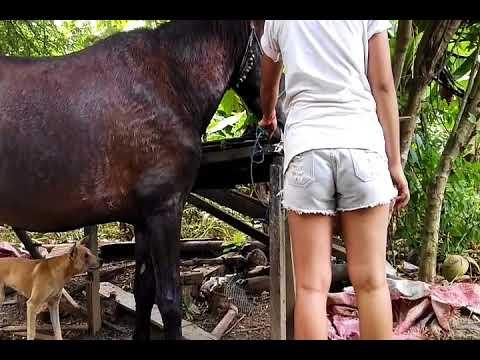 Xxx Mp4 एक घोड़ा और एक लड़की कैसे सुंदर लड़की द्वारा एन फ़ीड 720x480 4 96Mbps 2018 01 29 11 22 59 3gp Sex