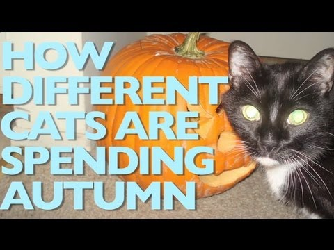 How Different Cats Are Spending Autumn