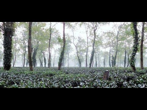 Guwahati to Kaziranga National Park | Beautiful Road side Tea Garden, Forest, Hills of Assam