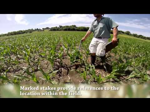Sever's Corn Maze - How's It Made?