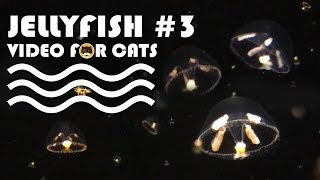 FISH VIDEO FOR CATS - Jellyfish #3. Entertainment Video for Cats to Watch.