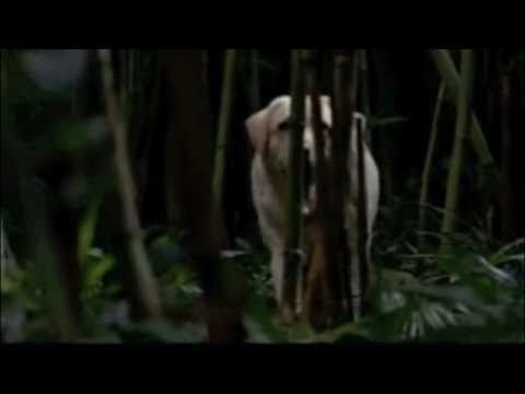 Lost Series Finale - The End - The Real Time Loop Alternate Ending.