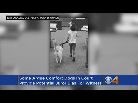 Dogs In Court Provide Comfort To Victims But Can Hinder Fairness
