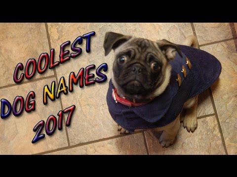COOLEST DOG NAMES 2017 🐶BEST PET NAMES Puppies  👀
