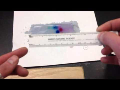 Gel electrophoresis measurements