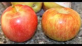 Honeycrisp Apples vs Gala Apples Review