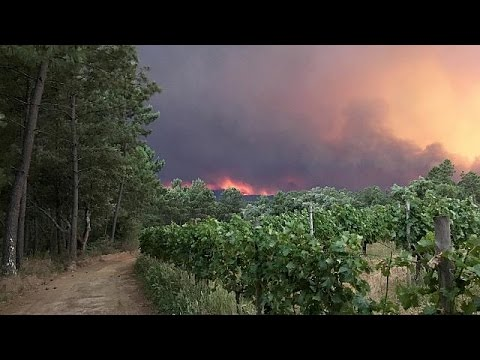 watch Devastating forest fire kills more than 40 in central Portugal