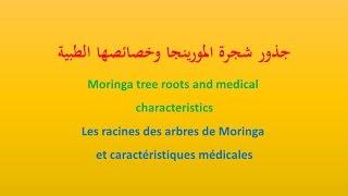 جذور شجرة المورينجا حصريا - Moringa tree roots exclusively