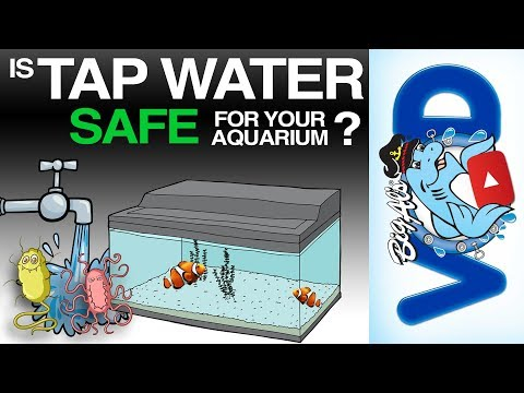 Is Tap Water Safe For Your Aquarium? | BigAlsPets.com