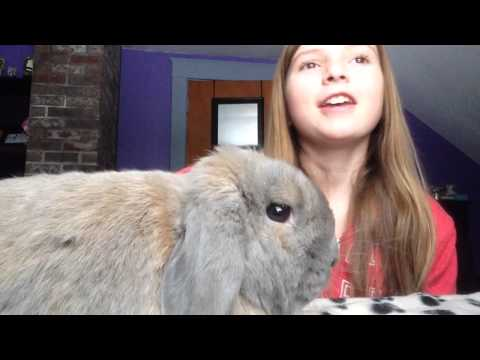 How to bond with your bunny | Holland Lop | Bunny Hercules | Video