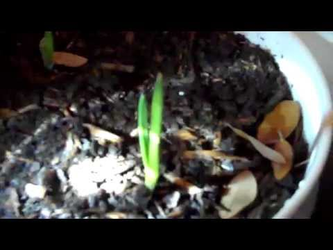 You Can Grow Organic Food from Table Scraps!